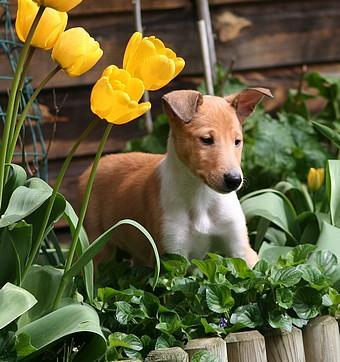 Bulle dans les tulipes