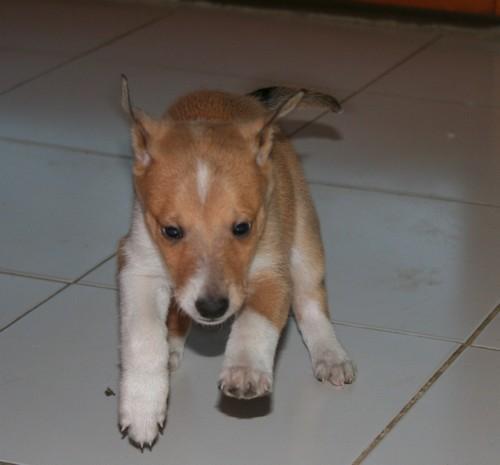 Bonnie - 6 semaines