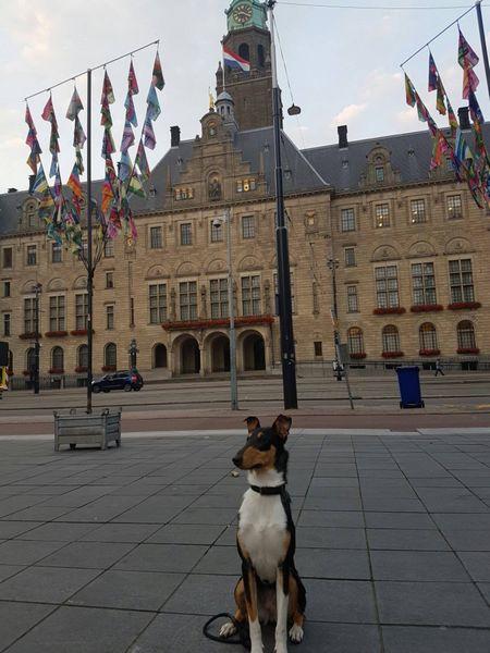 Amsterdam lou 2