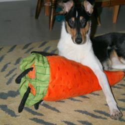 Les carottes sont cuites :-) !