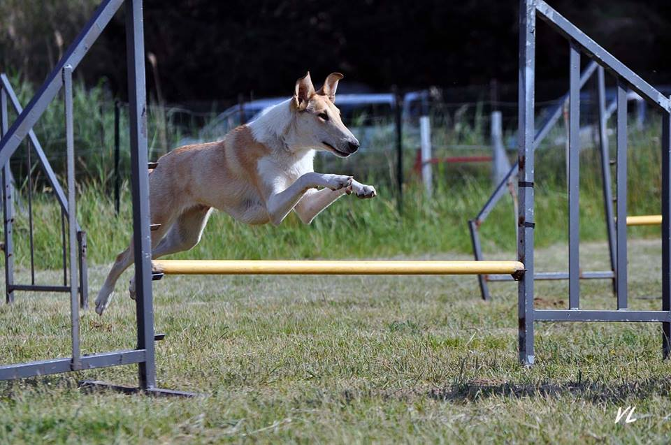 Ira agility mai14 2