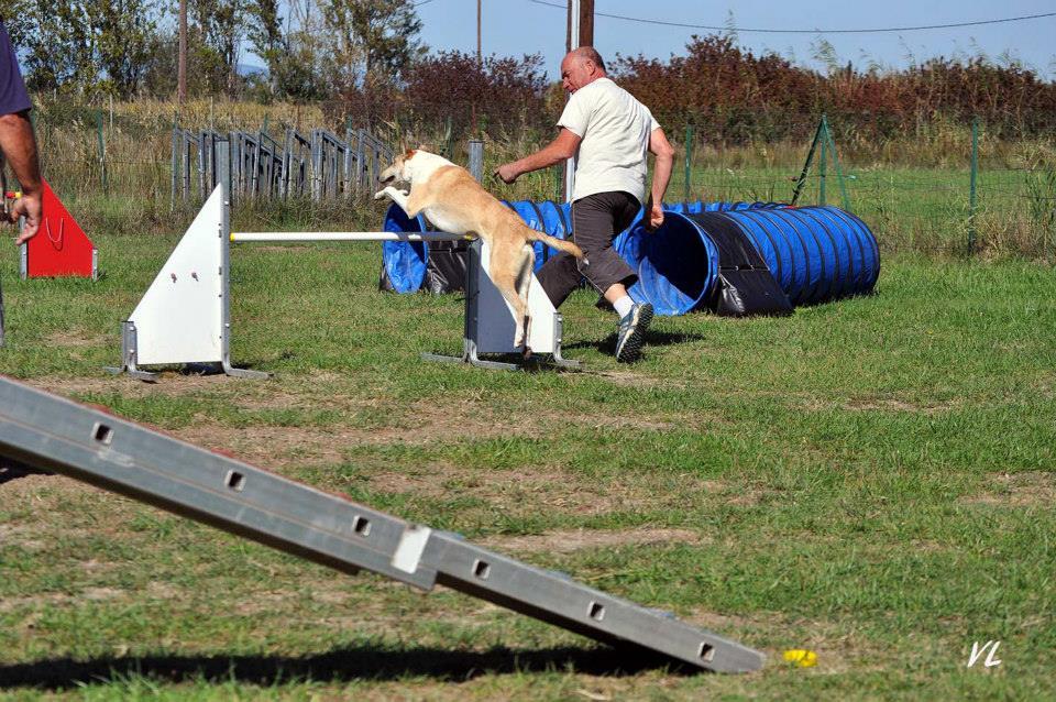 Ira agility oct2014 2