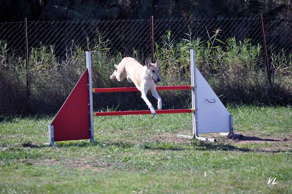 Ira agility oct2014 3