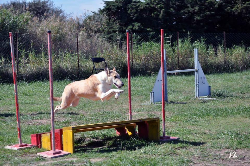 Ira agility oct2014 4