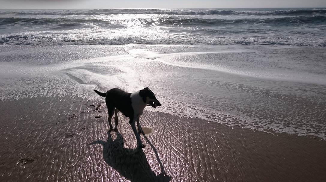 Jojoy a l ocean juin 2016