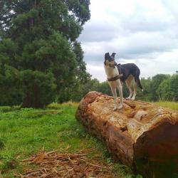 Pause sur le séquoïa