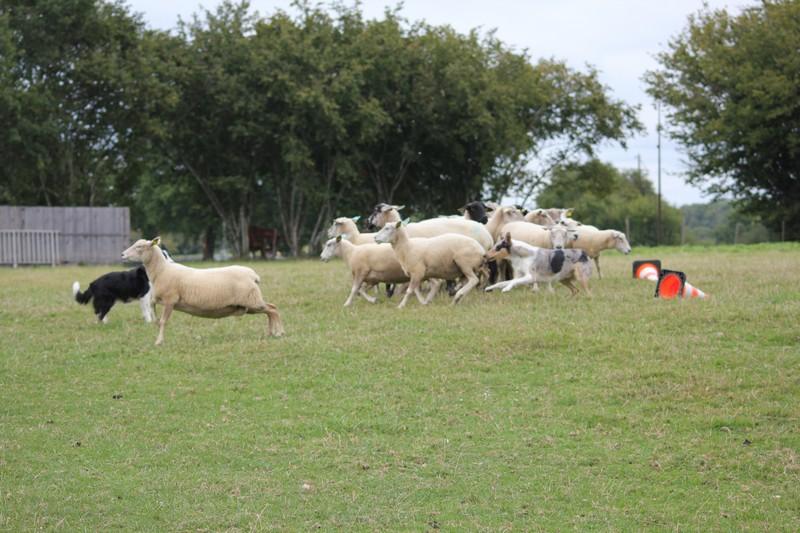 Sbuzz moutons 010914 0008