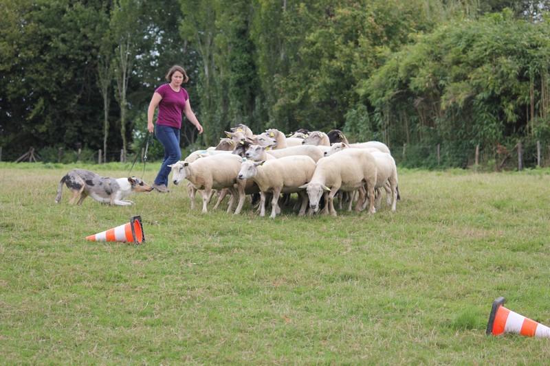 Sbuzz moutons 010914 0011