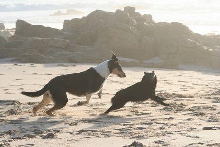 Jeu avec Villow à la plage
