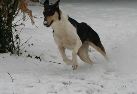Tout schuss dans la neige !